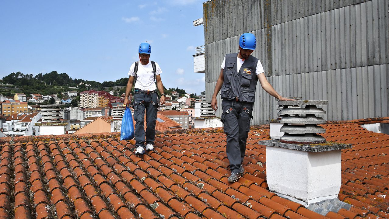 Guardianes de los tejados contra gaviotas.