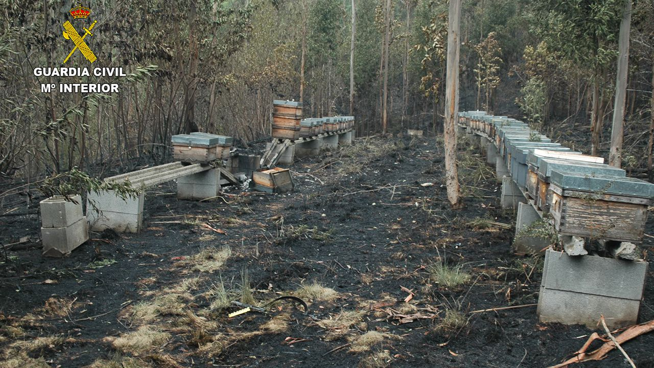 La Guardia Civil investiga los incendios forestales en Asturias