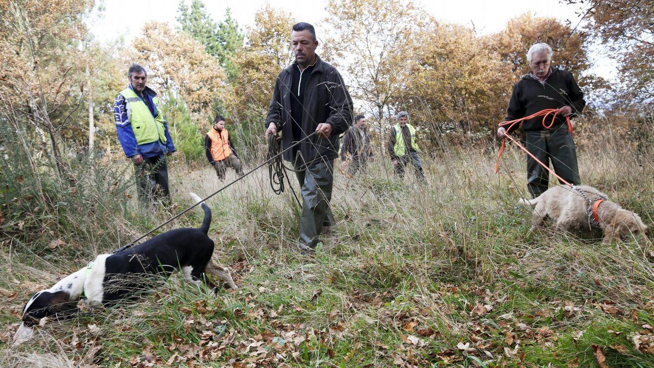 Cazadores buscando con perros el rastro del jabalí durante una batida