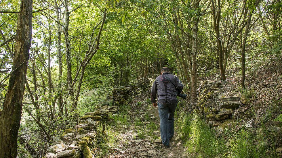El camino atraviesa bosques autóctonos que albergan una variada vegetación