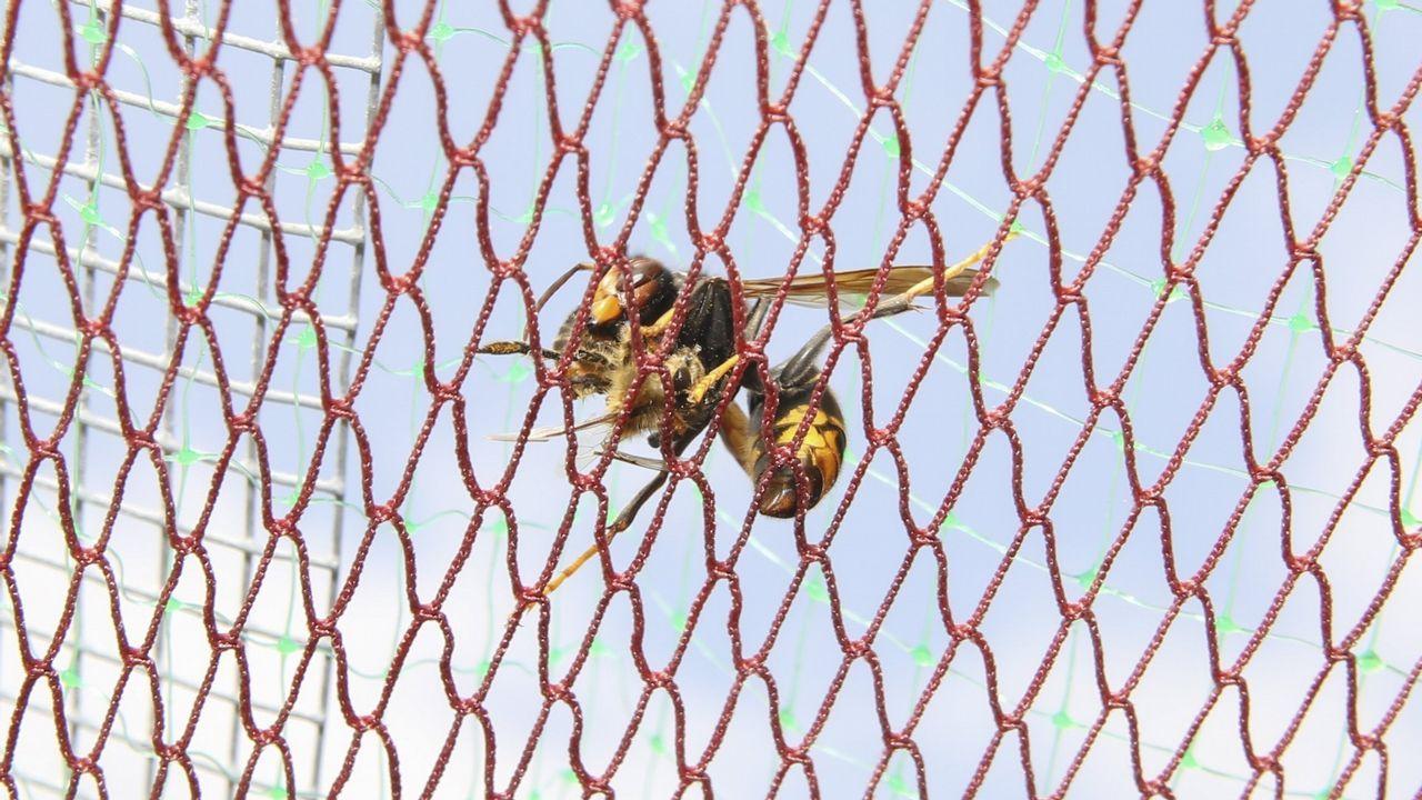 REDES Y CEBADEROS. La malla evita que la velutina acceda a la colmena y los comederos con insecticida la impregnan de veneno.
