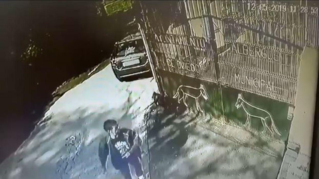 Centro penitenciario de Villabona.Un hombre abandona un perro en el Albergue de Animales de Oviedo