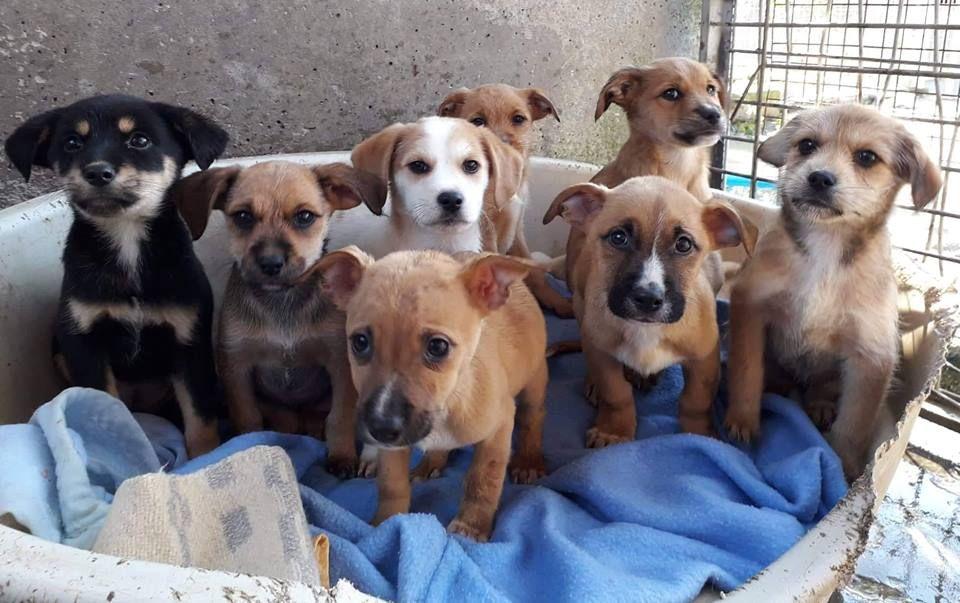 Los ocho cachorros, en el albergue de Serín