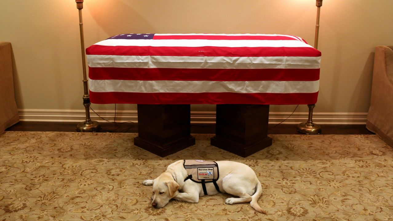 Sully, el perro de servicio del expresidente George H. W. Bush en sus últimos meses, permanece tumbado junto al féretro en la capilla ardiente, instalada en Texas