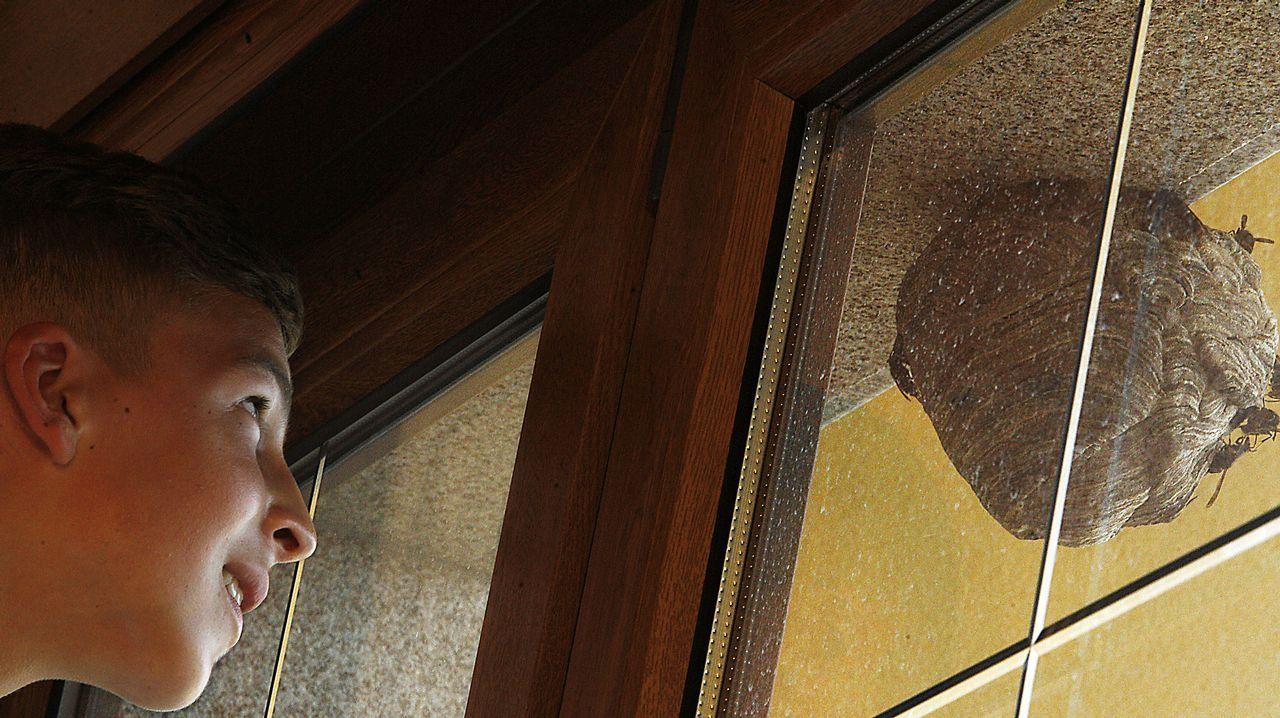 Así retiraron el nido de velutinas de Arteixo.Laura de Santiago, @lauradesantiago, en Espiñeiro
