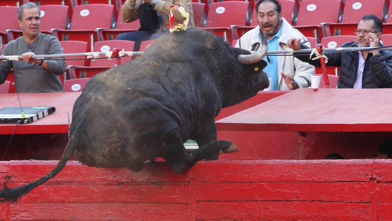 El toro Ochenton de 535 kg, lidiado por el torero mexicano Fabian Barba salta en México