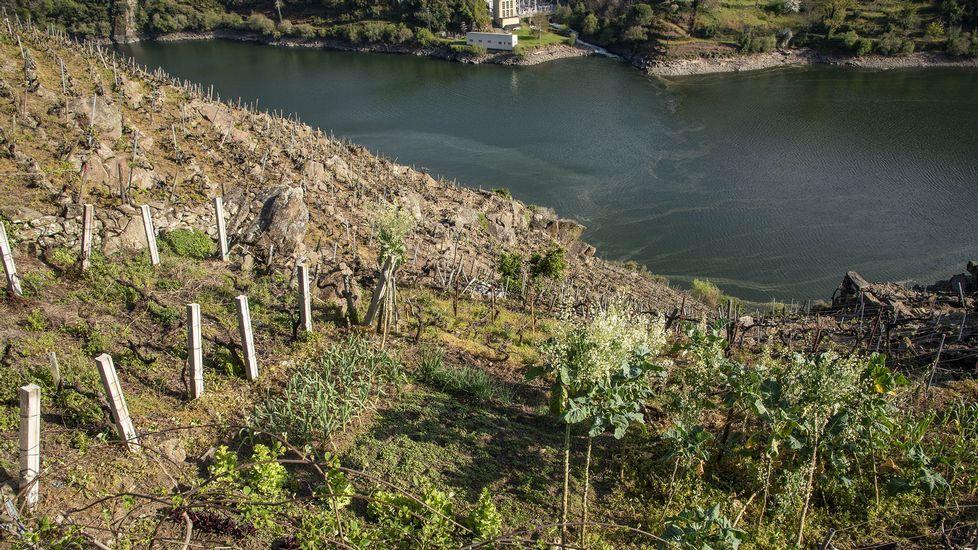 La ribera está situada frente a la central del río Mao, en Parada de Sil