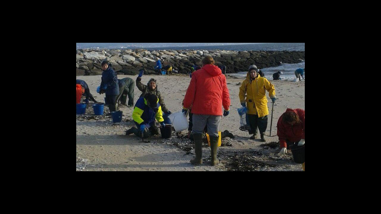 Diez toneladas de almeja intervenida y más de veinte empresas investigadas por la comercialización ilegal de marisco portugués.Lobos encontrados muertos en Asturias