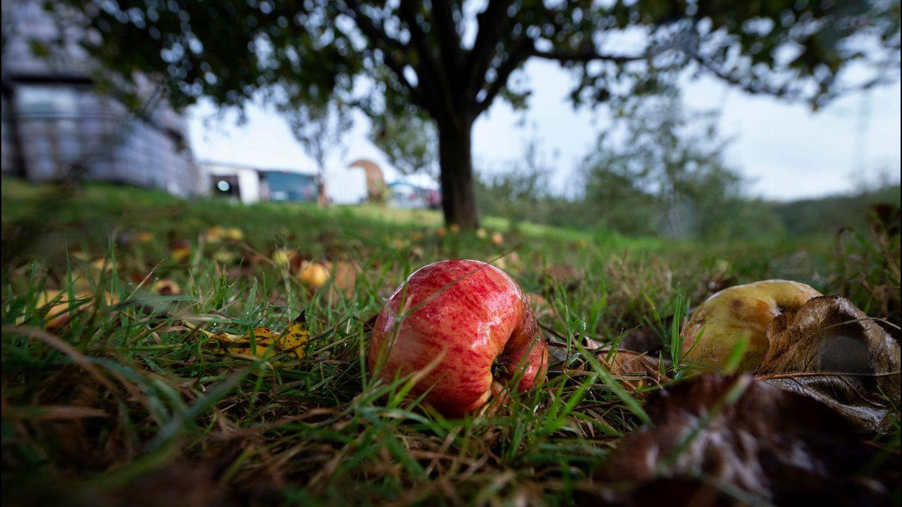 Acto en el campus contra el cambio climático.El proceso de tratamiento de la manzana y elaboración de la sidra en San Roman, Asturias