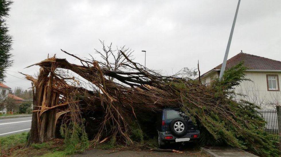 Un árbol se desplomó sobre un coche en Oroso