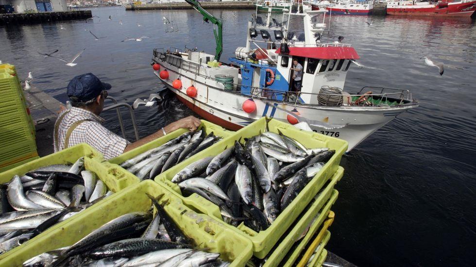 El Consejo Europeo trata un nuevo aplazamiento del Brexit.Imagen de archivo de descarga de pesca de caballa y sardina en O Berbés