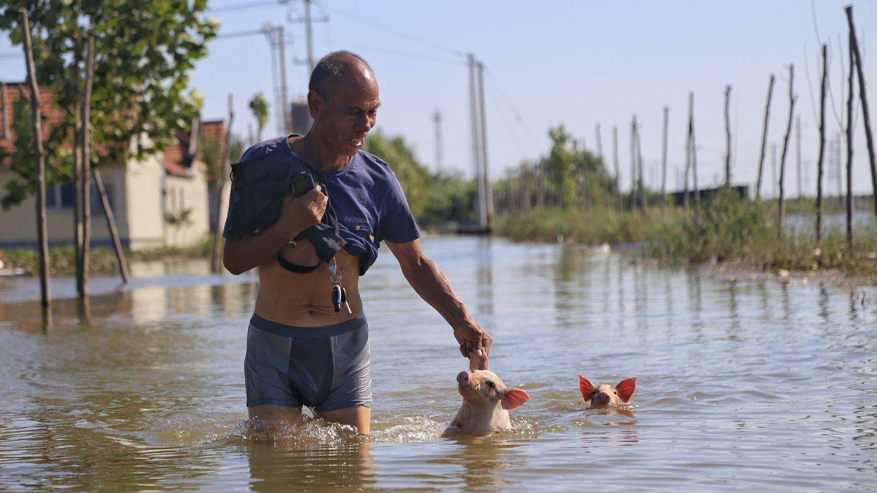 .Un hombre camina por una calle inundada junto a dos pequeños cerditos en China.