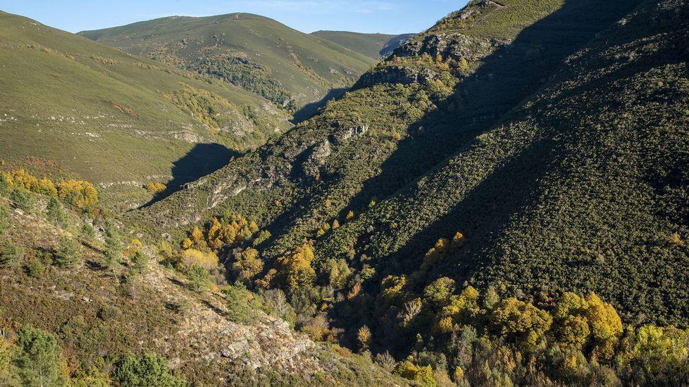 Sobre el cauce del río Soldón crecen las devesas de O Cervo y Mazales