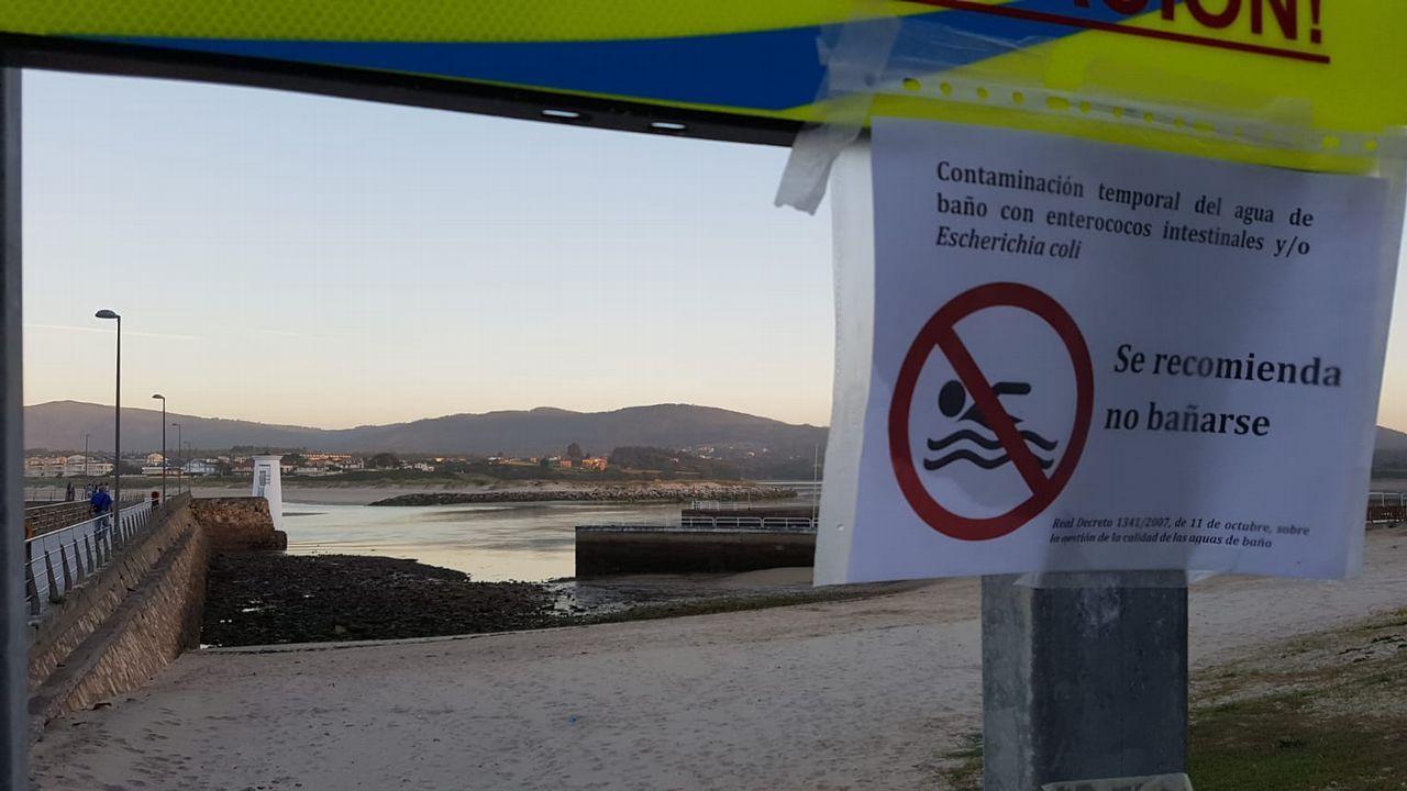 Los perrosdisfrutan de su primer día de playa en San Lorenzo