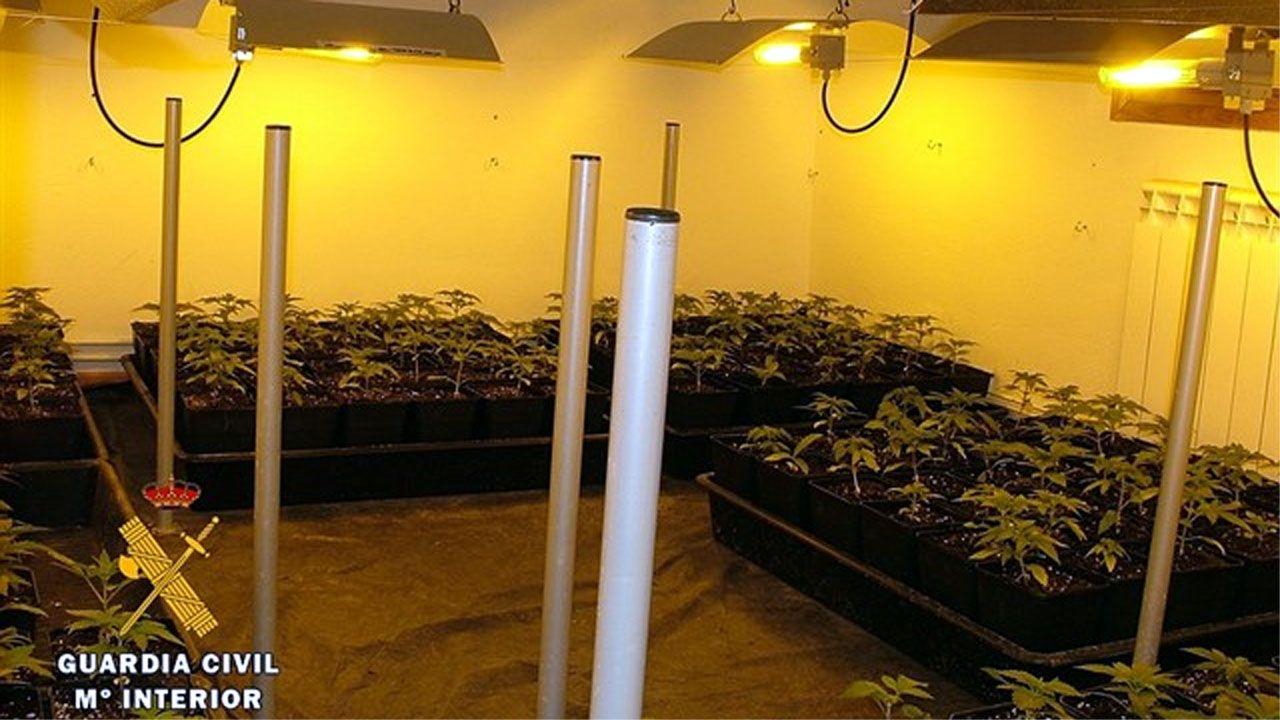 | EFE.La plantación de marihuana en Burgos cuya instalación eléctrica fue presuntamente realizada por Pedro Nieva