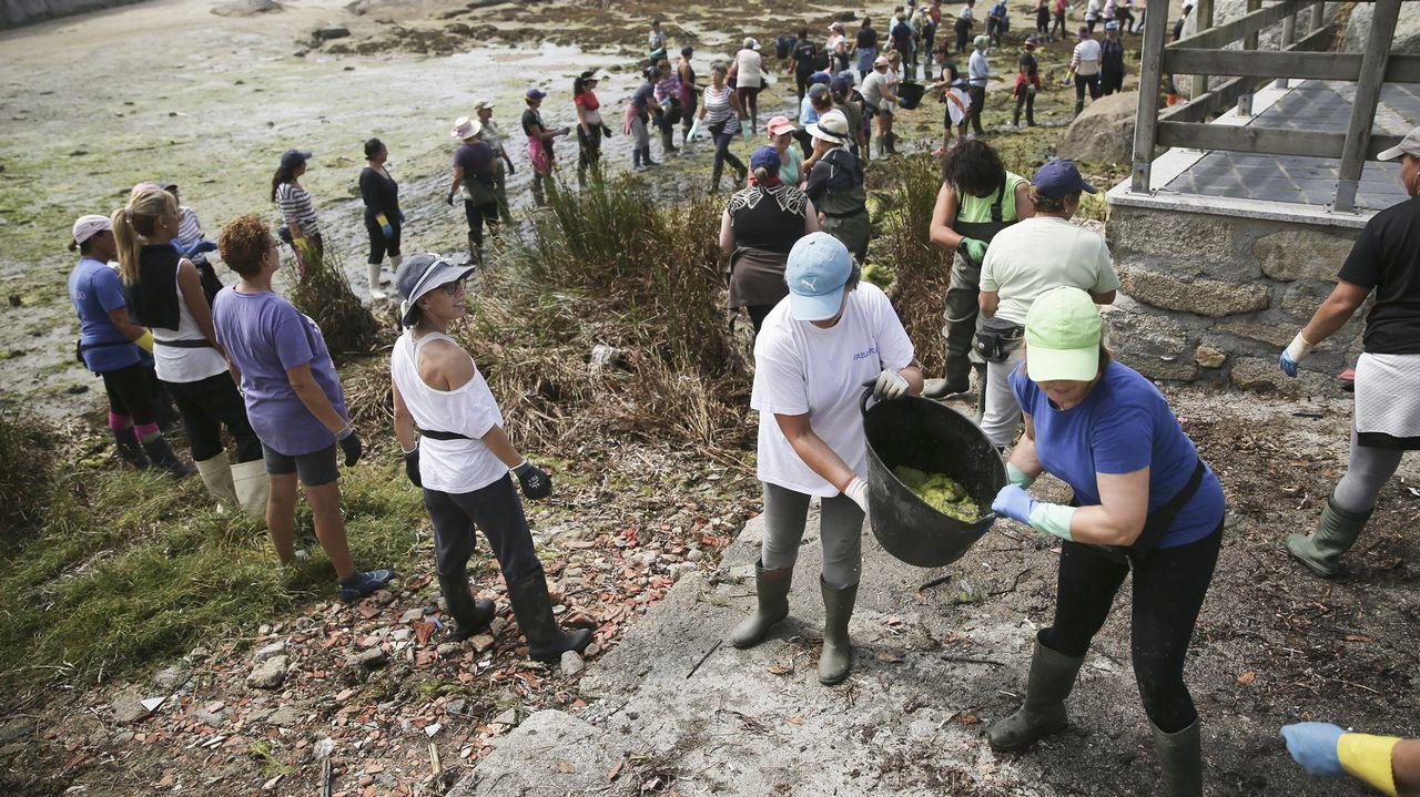 «Pegoume un coletazo e empece a sangrar polo brazo».Las mariscadoras de A Illa forman cadenas humanas para retirar las algas de las playas