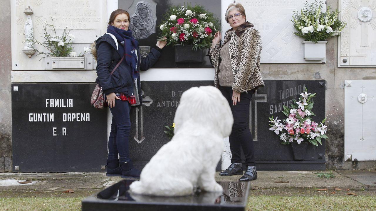 El perro que siempre verá a su dueño