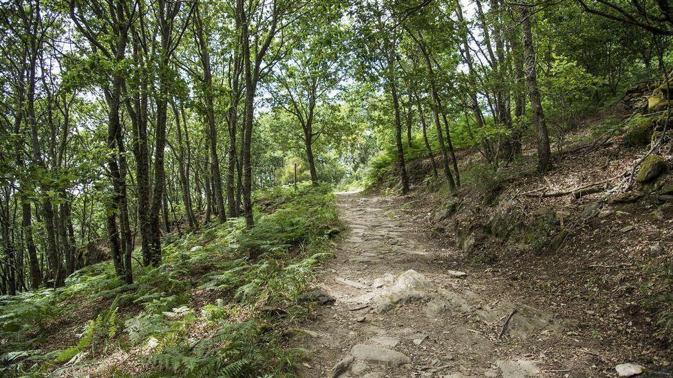 .El camino discurre a través de una zona boscosa