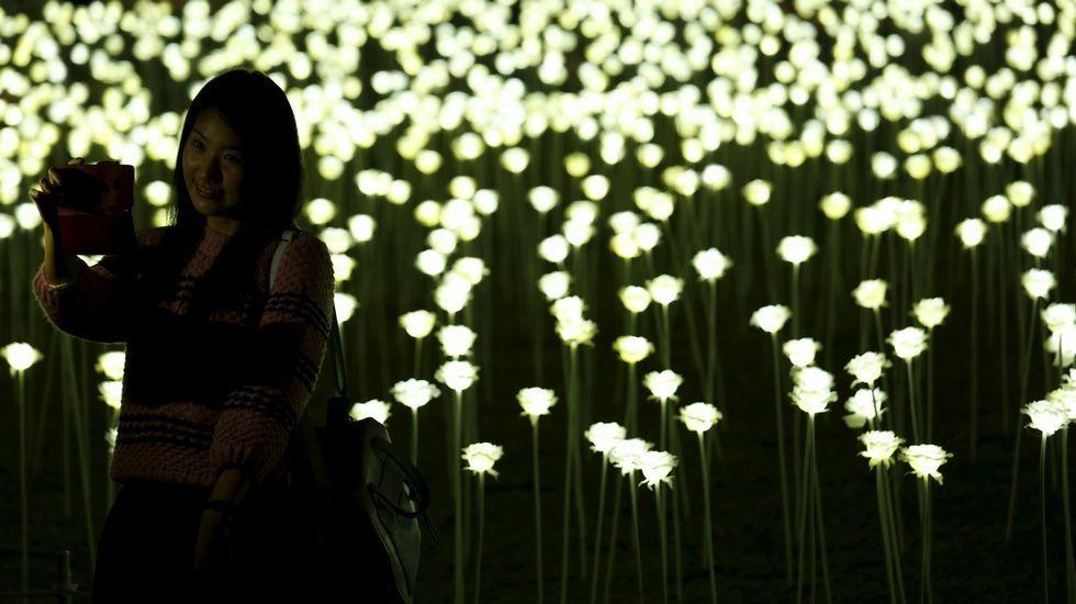 Jardín de rosas Led en Hong Kong