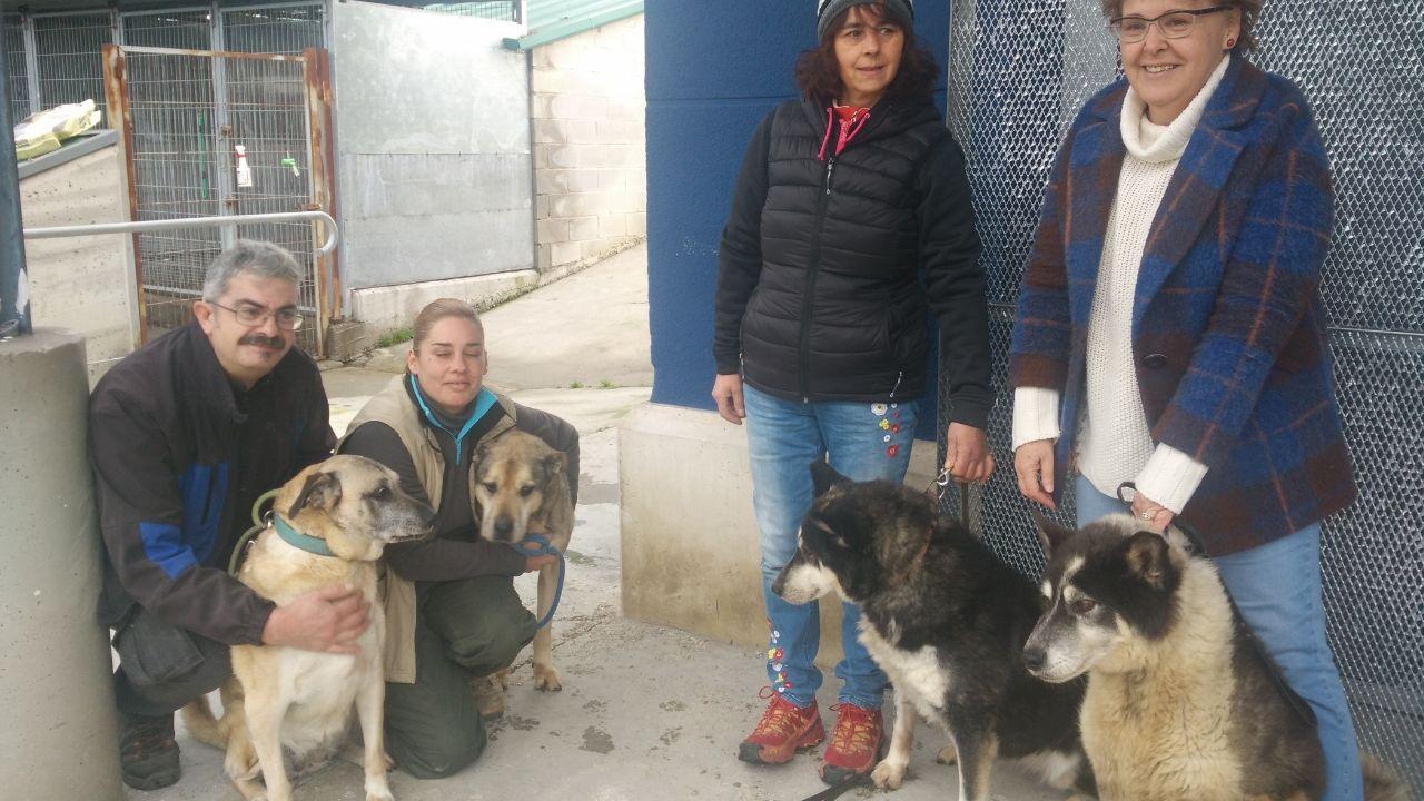 De izquierda a derecha, Rafa Rodríguez con Pipi  (10 años), Pilar García con Furia (12 años), Patricia Granda con Mati (13 años) y Lola Moreno con Colmillo (11 años), en el albergue de Serín.