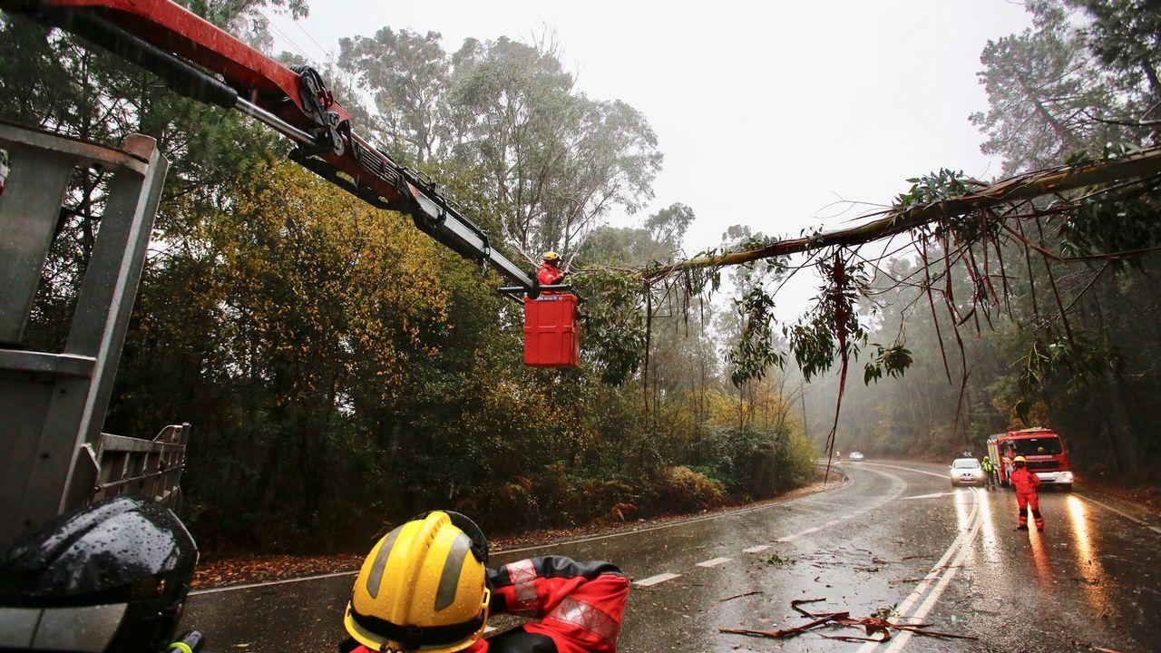 Árbol caído sobre el tendido eléctrico en Mos