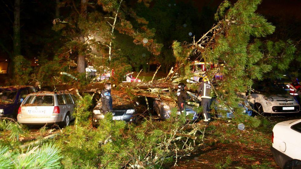 Cae un árbol encima de siete coches en ACEA Da Ama