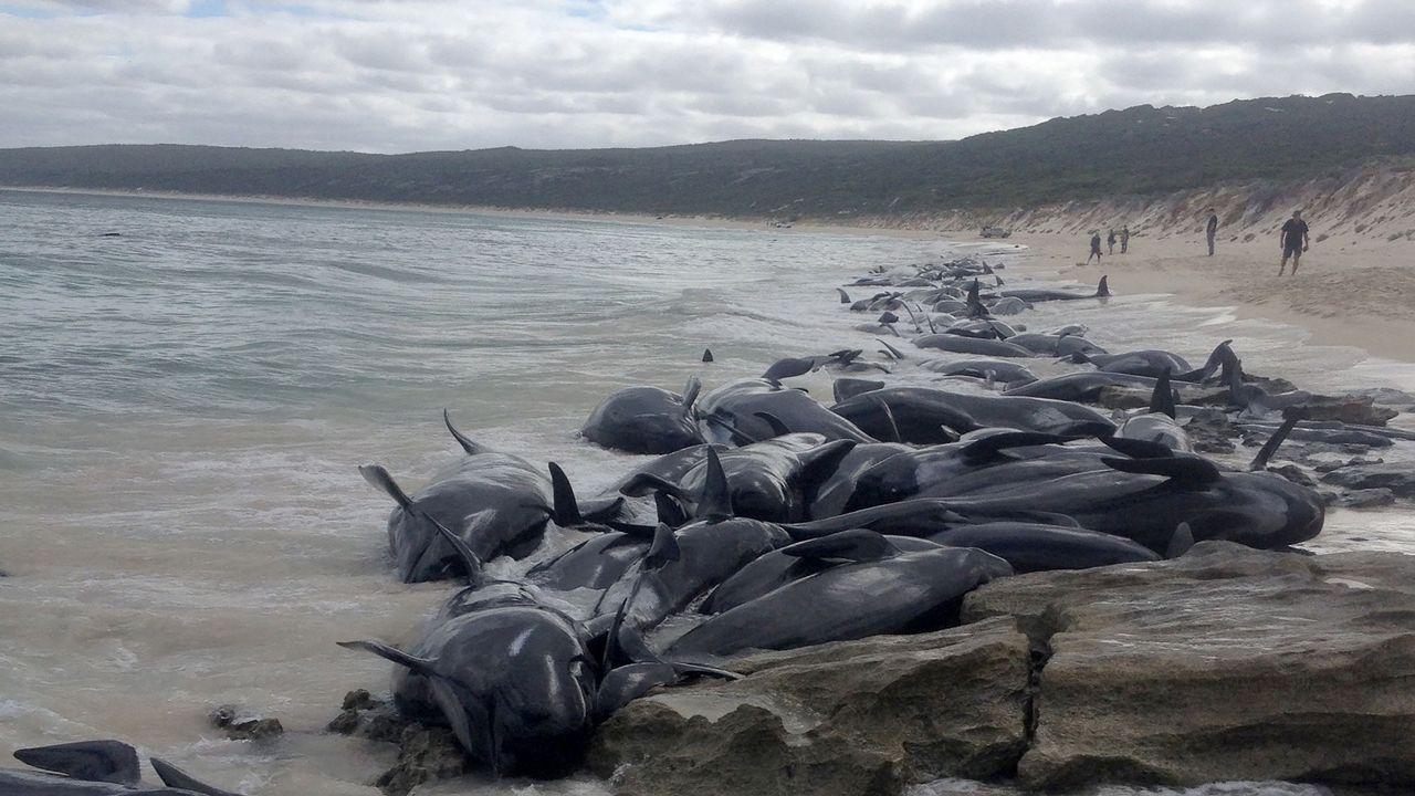 Un grupo de ballenas quedan varadas en una playa australiana.El embalse de Vilasouto el pasado septiembre, tras un año de sequía