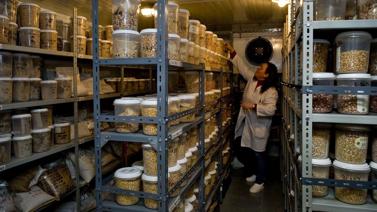 .En Galicia, el banco de germoplasma de Mabegondo, contribuye a recuperar alimentos autóctonos