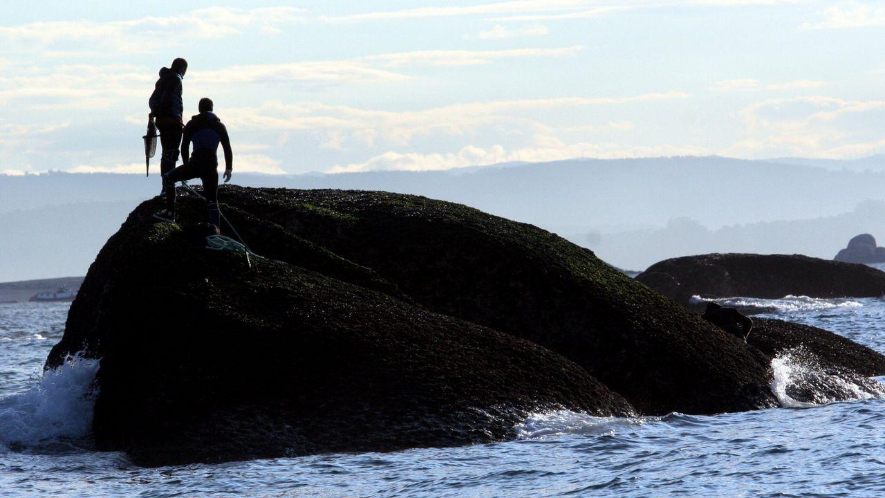 Diez toneladas de almeja intervenida y más de veinte empresas investigadas por la comercialización ilegal de marisco portugués.