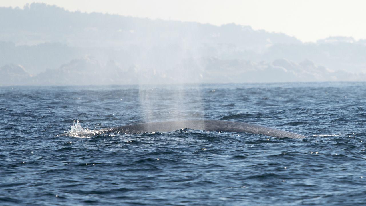 El chorro de una ballena azul
