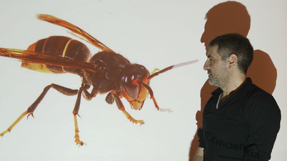 O biólogo Rodríguez Lado presentou a súa plataforma nun encontro do Consello da Cultura.