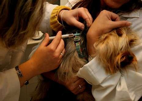 La vacuna de la rabia tiene una duración aproximada de tres años.