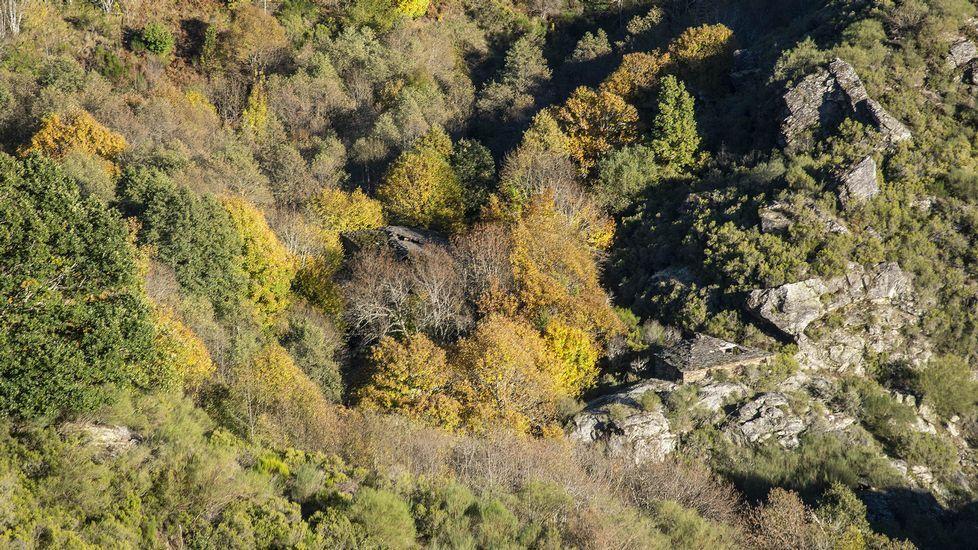 La antigua ferrería de O Mazo de Soldón asoma entre la vegetación que rodea el río