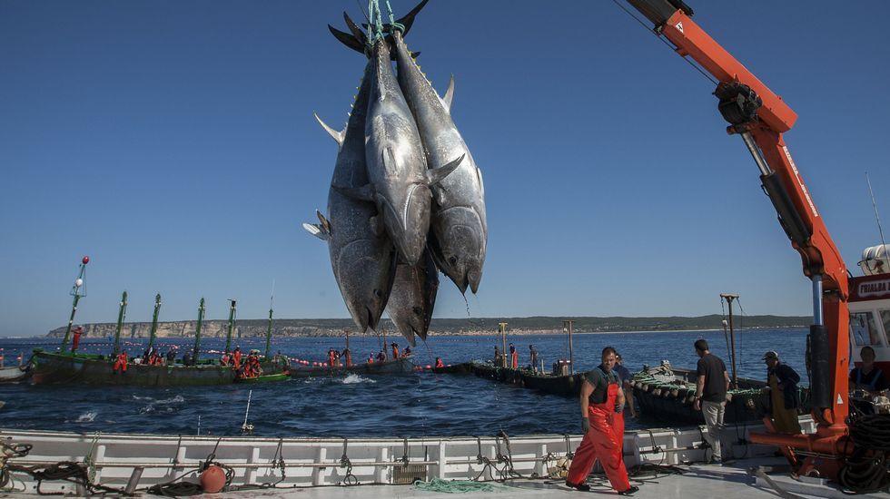 Captura de atún rojo en Barbate