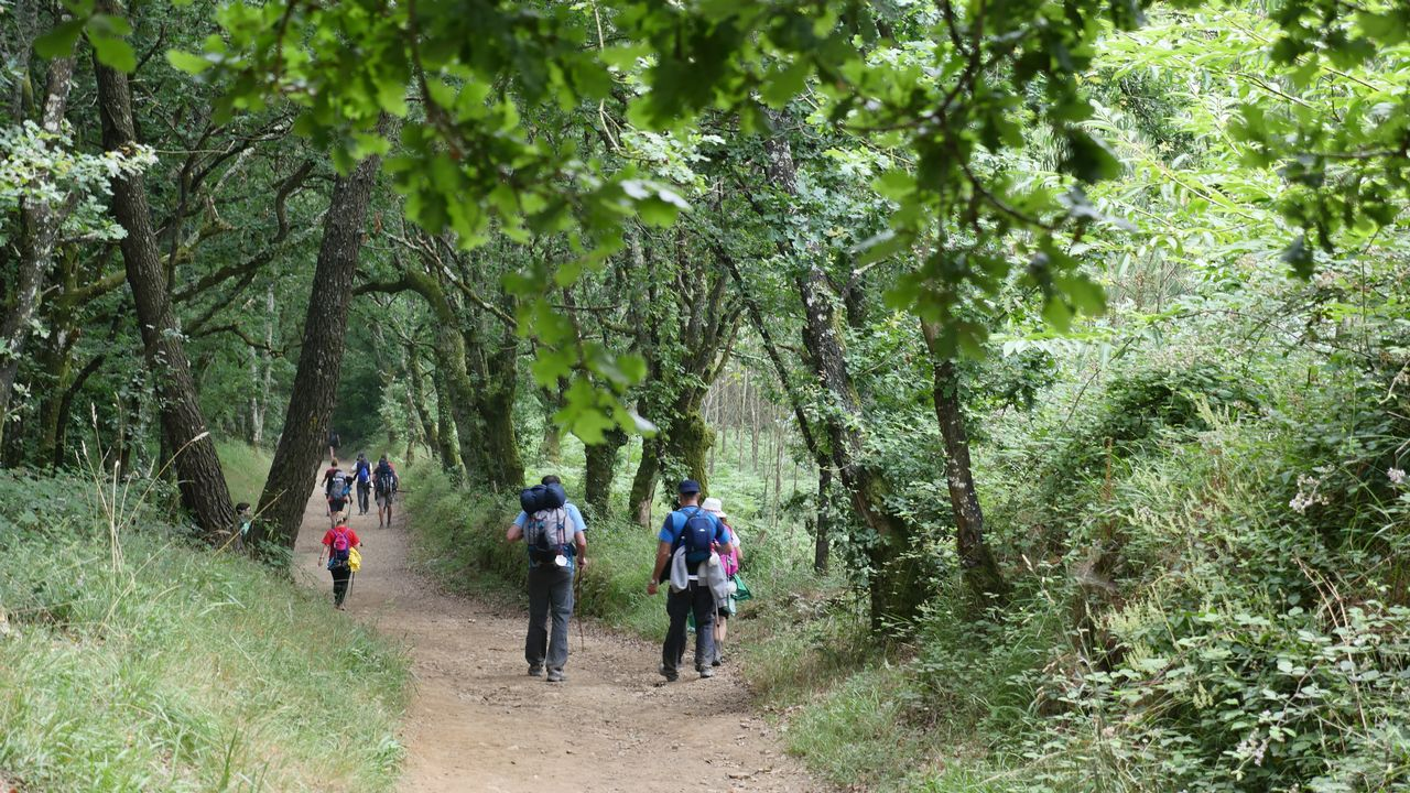 .El Camino entre carballos, saliendo de Palas
