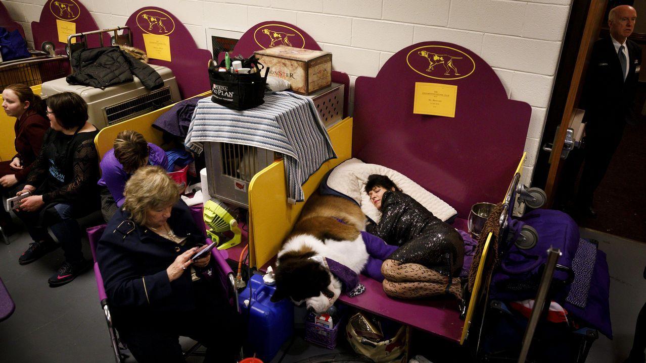 La entrenadora Melody Salmi descansa con un perro de raza San bernardo llamado «Aristo Presto» antes del inicio de la exposición canina Westminster Kennel Club 2018