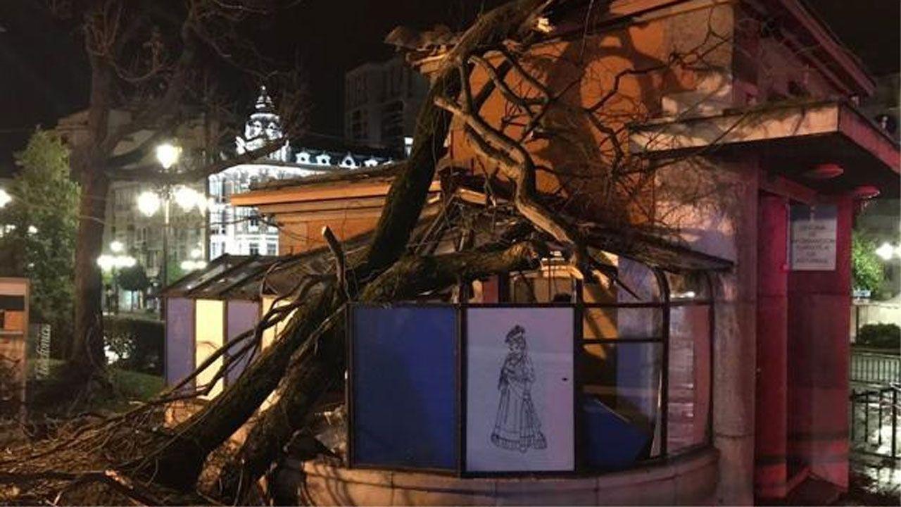 Árbol derribado sobre «El Escorialín» del paseo de los Álamos, en Oviedo