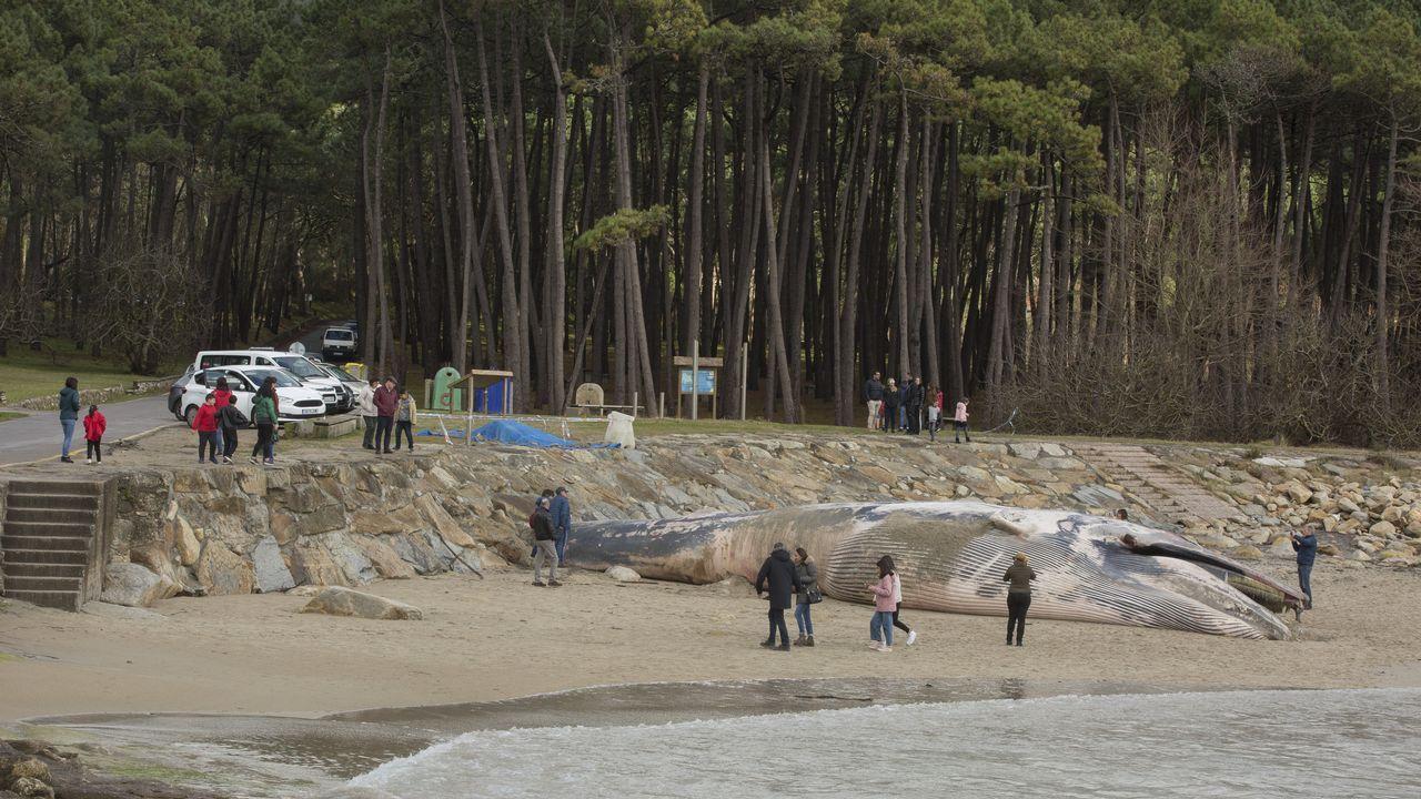 ¿Ballenas en la costa gallega? Sí, ya van siete en apenas un mes