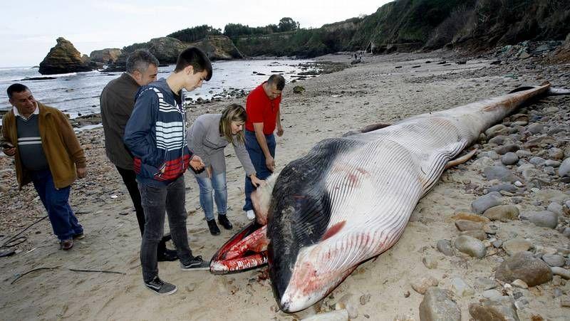 Delfines varados en Baiona Oia y Vigo