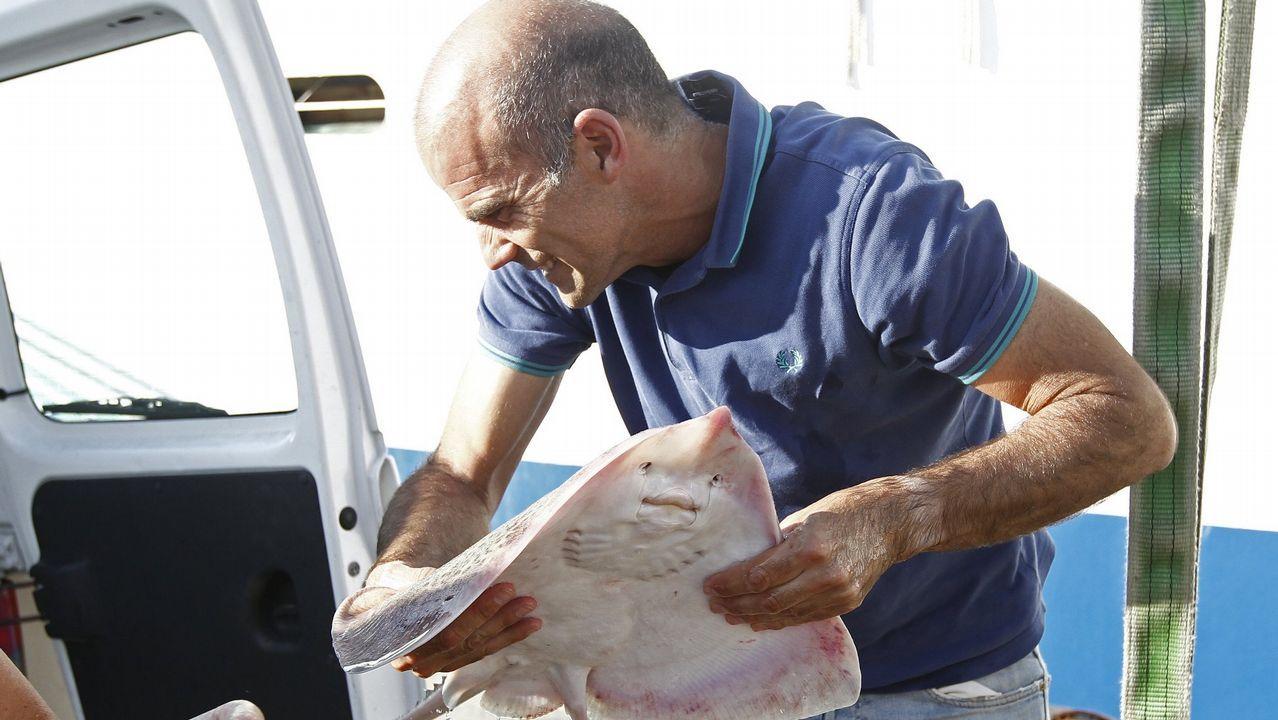 Espectacular retirada de una ballena de 20 metros en el puerto de Marín.Los científicos han demostrado la supervivencia de la raya