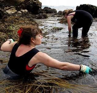 Dos mujeres recolectan algas para uso culinario en la ría de Arousa | S. Balvis