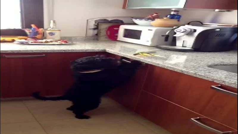 La perra que juega con el canario