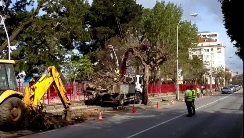 Talan los árboles que estaban al lado del parque de la playa de A Compostela