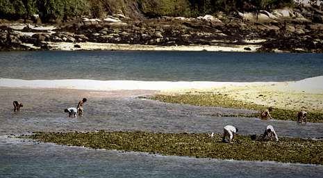 Los bañistas por un lado y los furtivos por otro extrajeron marisco durante la mañana  de ayer.