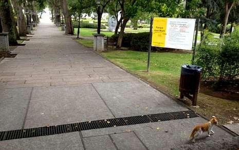 Algunos gatos callejeros viven en el parque de José Martí.