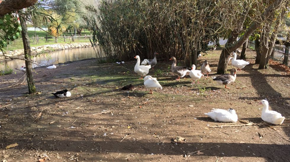 Parque da Lagoa en Mera, Oleiros