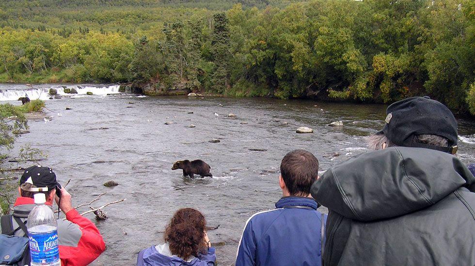 Turismo de avistamiento de osos en Estados Unidos