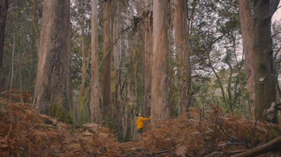 El bosque de los gigantes gallegos
