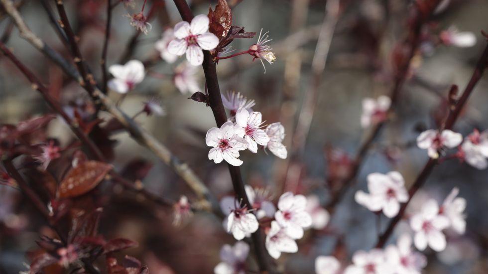 Estos son los colores de la primavera en Galicia