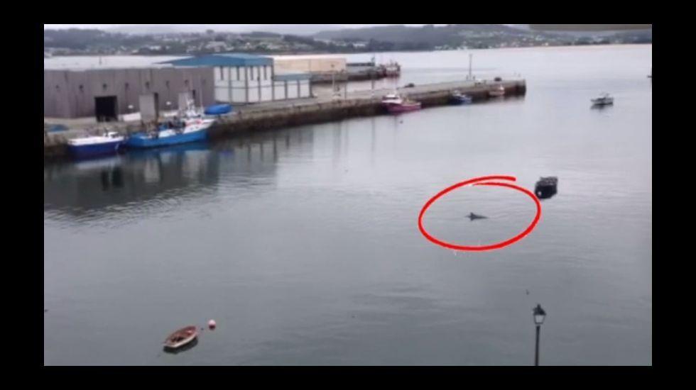 Delfín en Sada